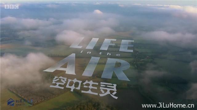 《空中生灵 Life in the Air》