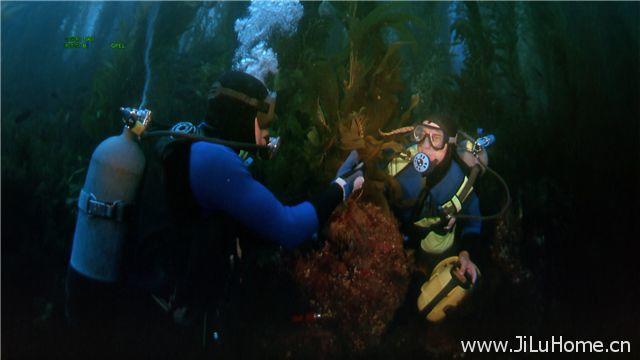 《鲨鱼探索 Search For The Great Sharks》