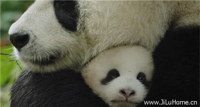 《我们诞生在中国 Born in China》