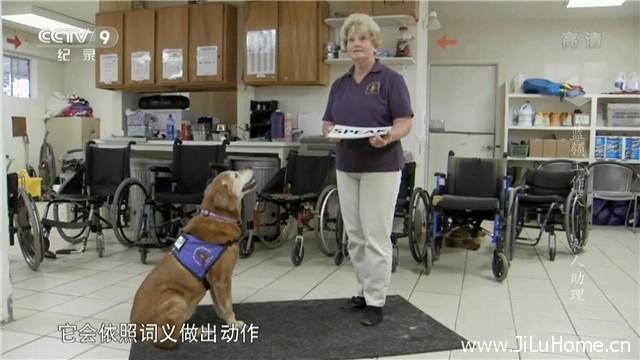 《蓝领工作犬 Blue Collar Dogs》