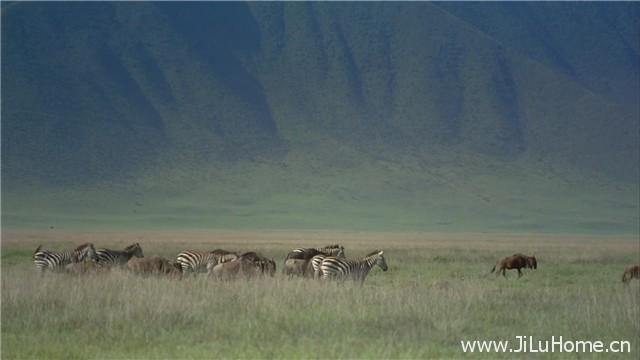 《非洲:塞伦盖蒂国家公园 Africa: The Serengeti》