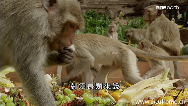 《猴子大观 Monkeys Revealed》