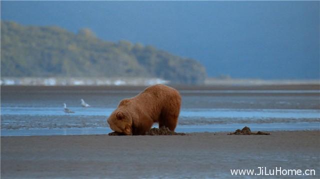 《阿拉斯加:野生动物的精神  Alaska:Spirit of the Wild》