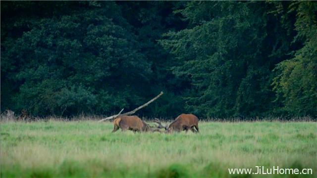《神话的森林 Mythos Wald》