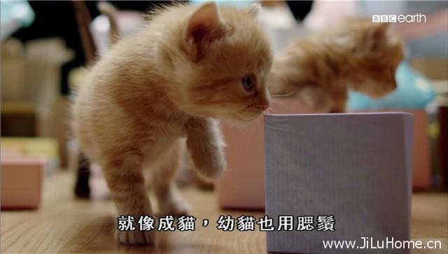 《猫的秘密世界 Secret Life of Cats》