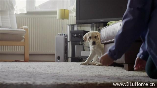 《狗的秘密生活 Secret Life of Dogs》