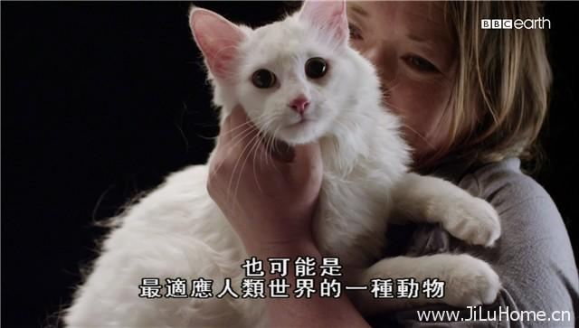 《猫的秘密世界 Secret Life of Cats》