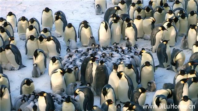《帝企鹅宝宝的生命轮回之旅 Snow Chick - A Penguin's Tale》