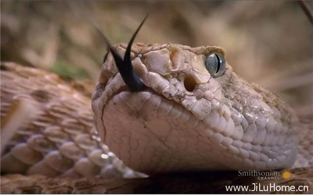 《毒蛇女王 Viper Queens》