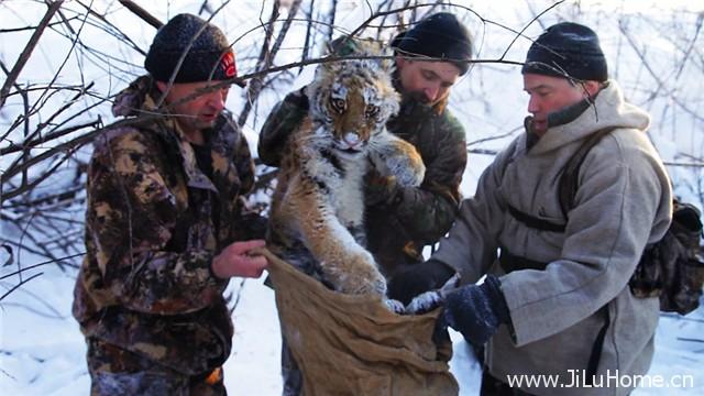 《雪虎任务 Operation Snow Tiger》