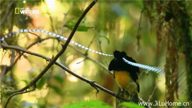 《印尼野生大地 Wild Indonesia》