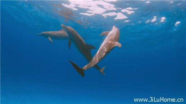 《海豚 Dolphins》
