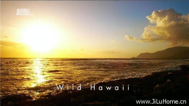 《野性夏威夷 Wild Hawaii》