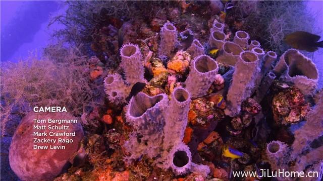 《追逐珊瑚 Chasing Coral (2017)》