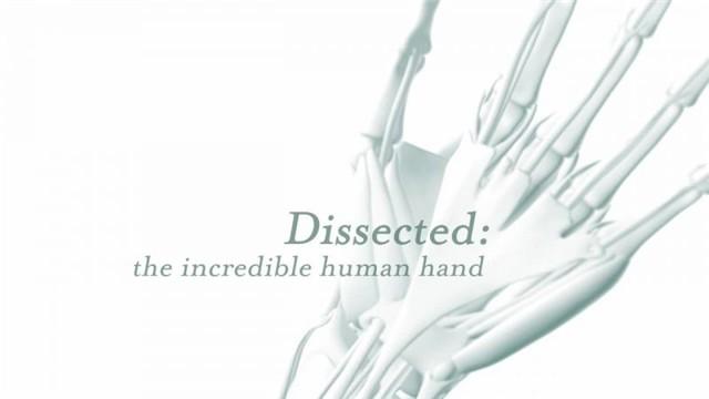 《剖析手足:不可思议的人体 Dissected The Incredible Human (2014)》