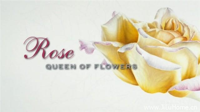 《玫瑰:花中之后 Rose - Queen of Flowers (2010)》