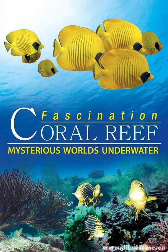 《魅力珊瑚礁:水下神秘世界 Fascination Coral Reef:Mysterious Worlds Under Water (2012)》