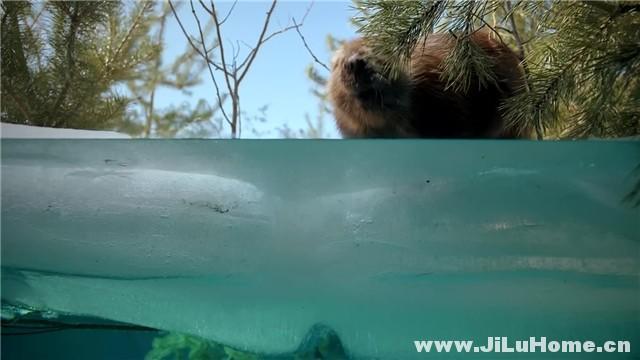 《海狸一家 Beavers (1988)》