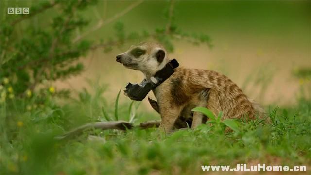 《假如动物会摄影 Animals with Cameras (2018)》