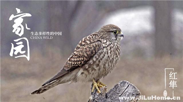 《家园:生态多样性的中国 China Wild (2018)》