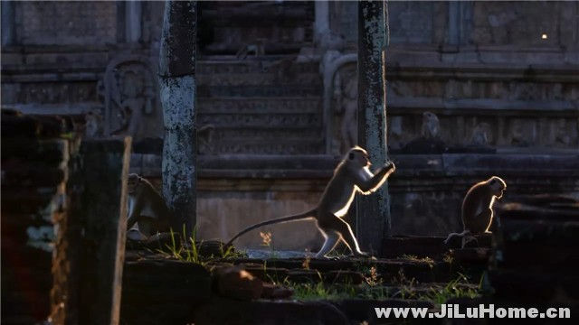 《猴子王国 Monkey Kingdom (2015)》