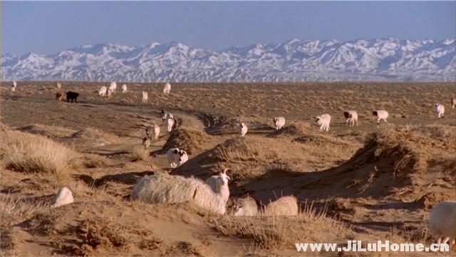 《哭泣的骆驼 Die Geschichte vom weinenden Kamel (2003)》
