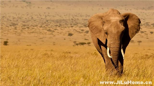 《非洲的大象王国 Africa's Elephant Kingdom (1998)》