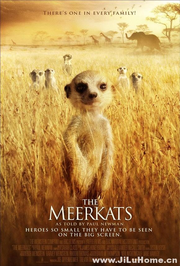 《猫鼬:蒙哥 The Meerkats (2008)》