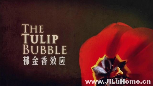《郁金香效应 The Tulip Bubble 2012》