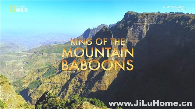 《山地狒狒 King of the Mountain Baboons》
