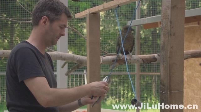 《鸟类的智力/揭秘鸟类大脑 Bird Brain 2011》