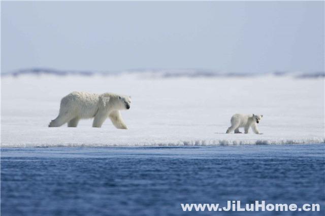 《北极故事/北极传说 Arctic Tale 2007》