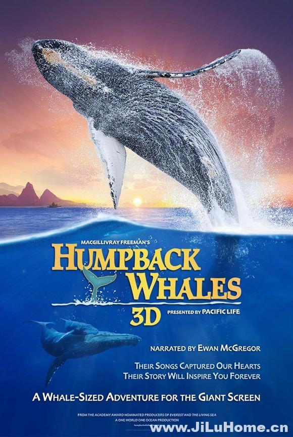《座头鲸 Humpback Whales 2015》