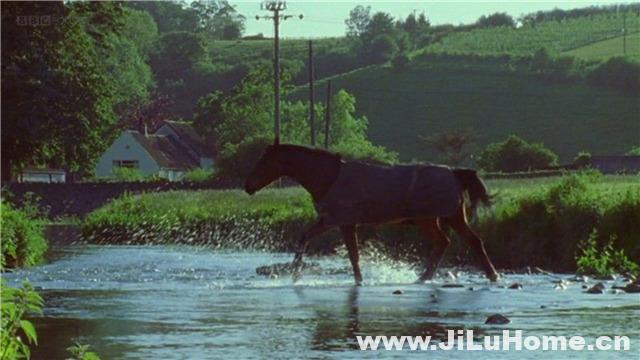 《翠鸟河/恋恋爱河 My Halcyon River》