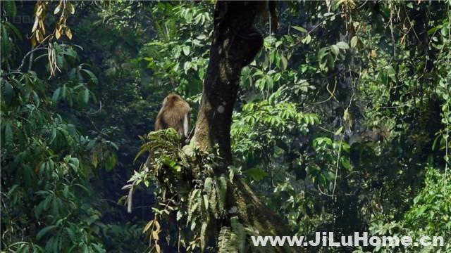 《爪哇小灵精/爪哇丛林精灵 Jungle Gremlins of Java (2011)》