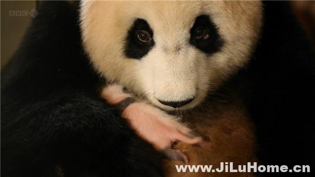 《熊猫缔造者 Panda Maker (2010)》