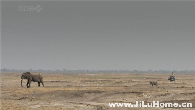 《大象无国界 Elephants Without Borders (2009)》