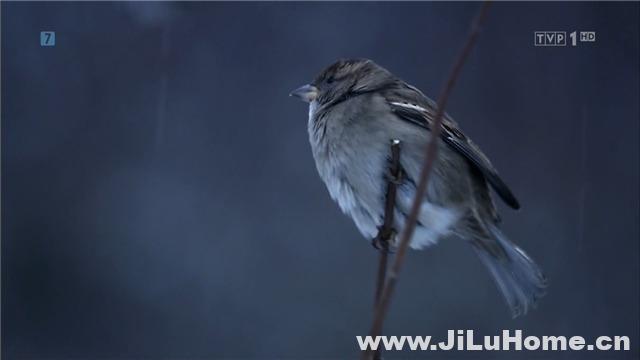 《星球上的麻雀 Planet Sparrow (2013)》