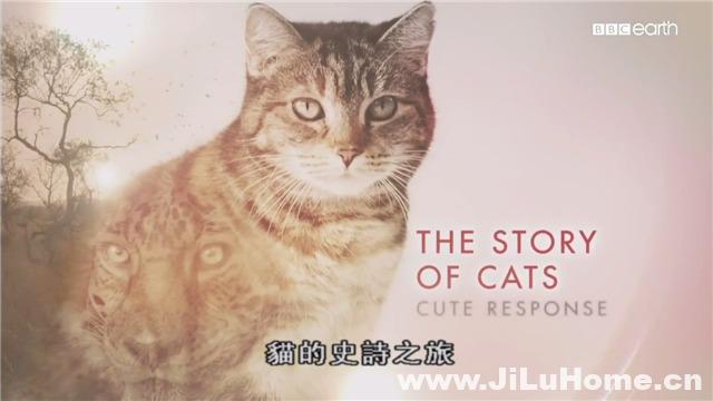 《猫科动物的故事/猫的史诗之旅 The Story of Cats (2016)》